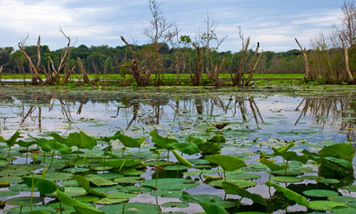 Biodiversity news, wetlands, Jairam Ramesh, Environment news, Delhi NCR real estate, Bangalore Real Estate, Track2Media, Track2Realty, ravi sinha, india realty news, india real estate news, real estate news india, realty news india, india property news, property news india, india news, property news, real estate news, Mumbai Real Estate, India Property