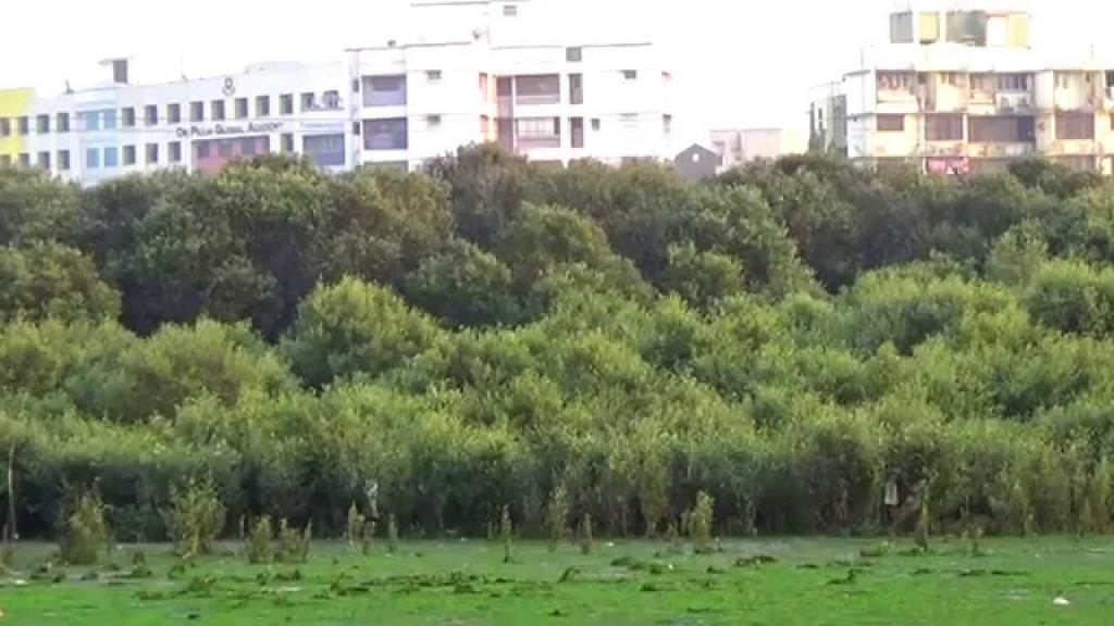 Mangroves, Mangroves in Mumbai, Mangrove cutting, Encroachment on Mangrove land, Mumbai real estate, Mangrove protection on sea front